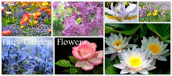 A collection of beautiful flowers for fairy gardens