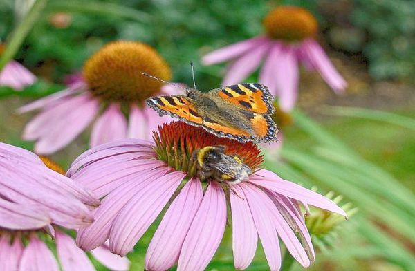 best plants for butterflies and bees